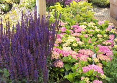 Vaste planten en onkruid